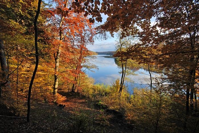 Jesienne drzewa i jezioro